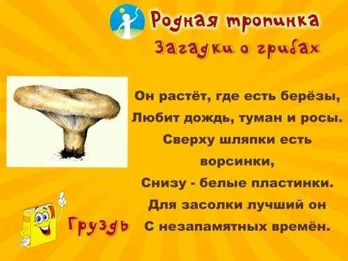 Картинка рыжик гриб для детей   подборка 008