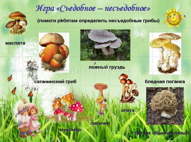 Картинка рыжик гриб для детей   подборка 013
