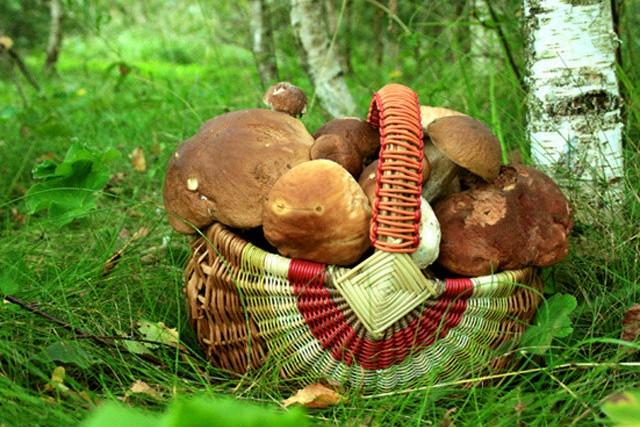 Картинка рыжик гриб для детей   подборка 014