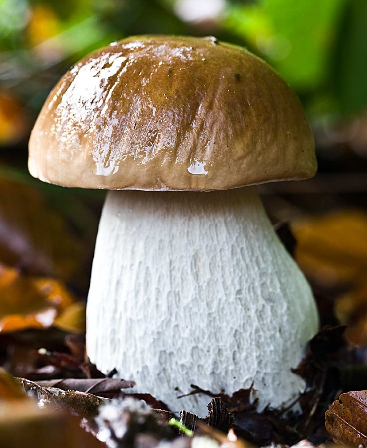 Картинка рыжик гриб для детей   подборка 015