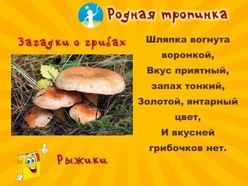 Картинка рыжик гриб для детей   подборка 016