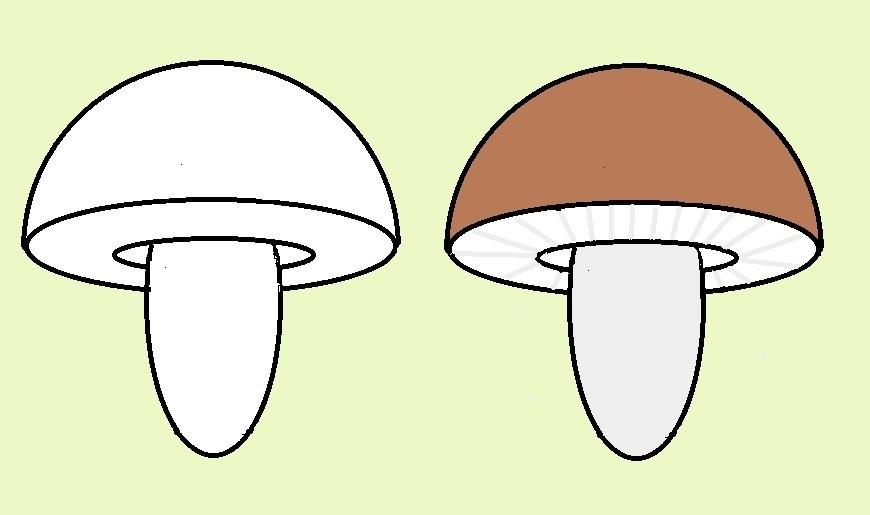 Картинка рыжик гриб для детей   подборка 017
