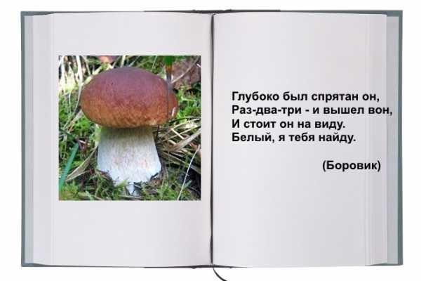 Картинка рыжик гриб для детей   подборка 018