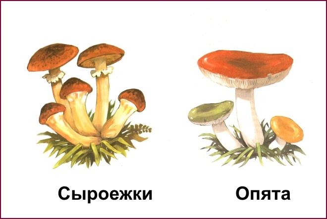 Картинка рыжик гриб для детей   подборка 023