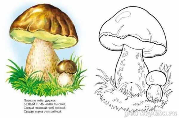 Картинка рыжик гриб для детей   подборка 027