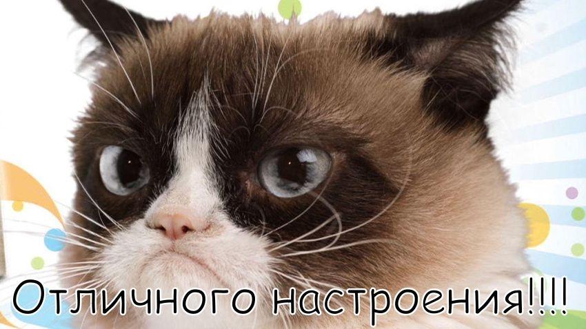 Картинка смешная удачного дня   подборка007