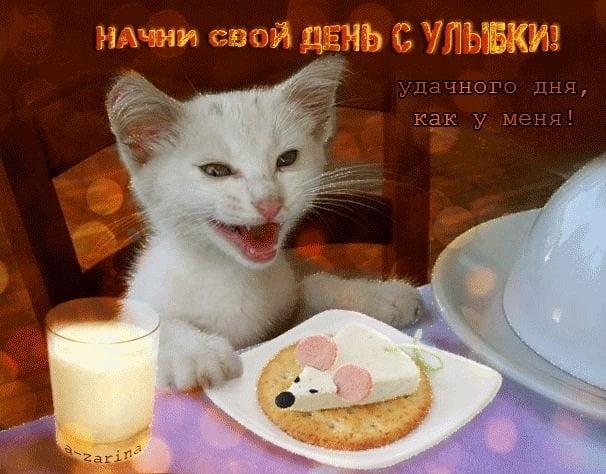 Картинка смешная удачного дня   подборка009