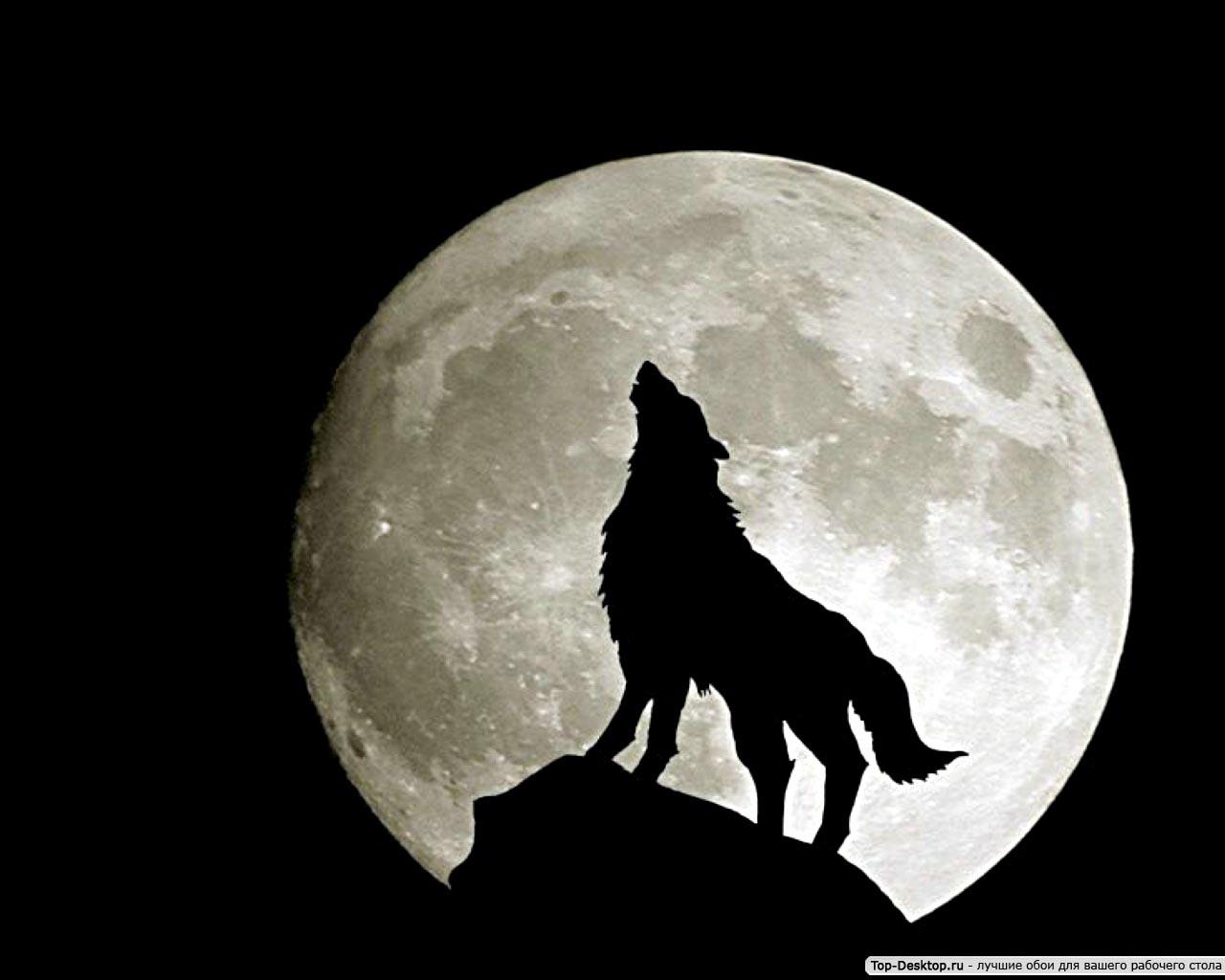Картинки Волки скачать на рабочий стол бесплатно (11)