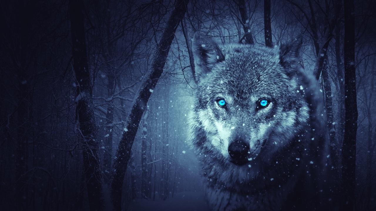 Картинки Волки скачать на рабочий стол бесплатно (13)
