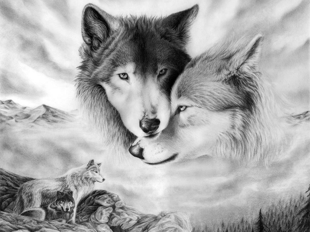 Картинки Волки скачать на рабочий стол бесплатно (15)