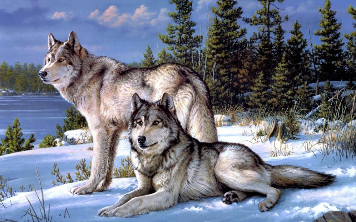 Картинки Волки скачать на рабочий стол бесплатно (18)