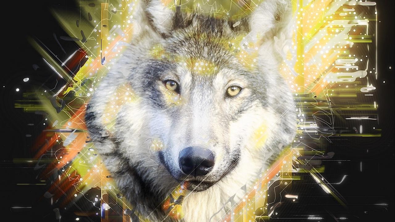 Картинки Волки скачать на рабочий стол бесплатно (21)