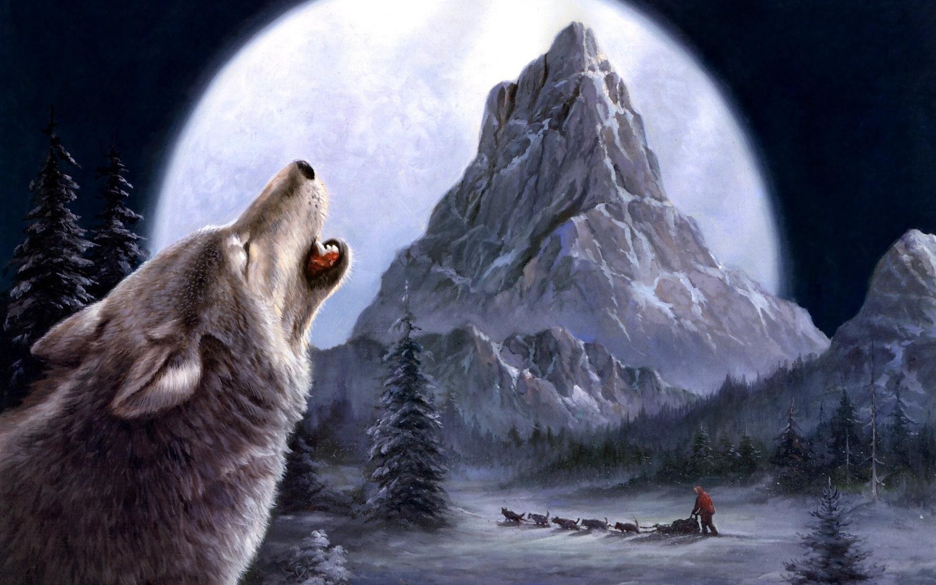 Картинки Волки скачать на рабочий стол бесплатно (9)
