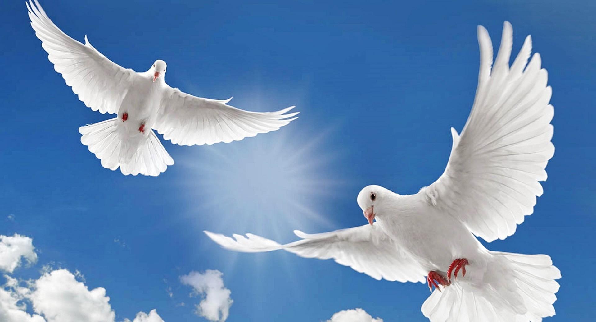 Картинки Мир за мир во всем мире   подборка фото (15)