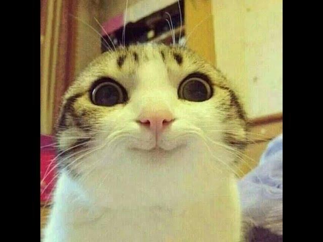 Картинки веселые с кошками   подборка фото 024
