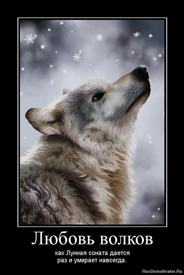 Надписями, картинки с волками и надписями со смыслом на заставку на телефон