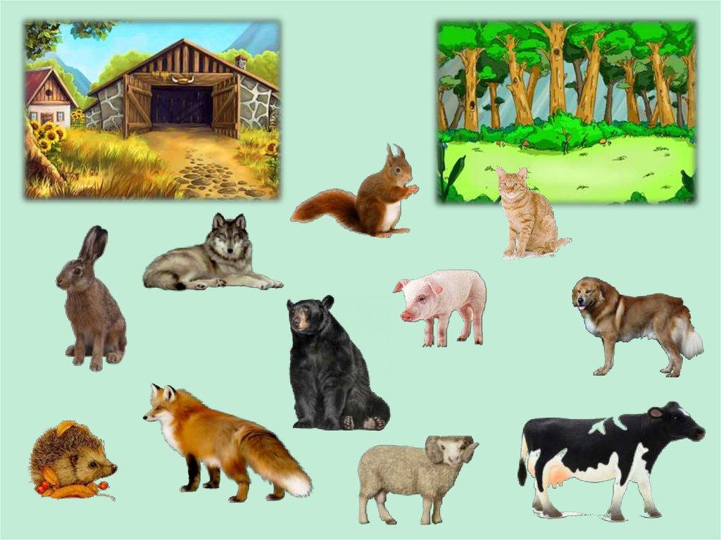 этого, дикие и домашние животные картинки к занятию главное, что это
