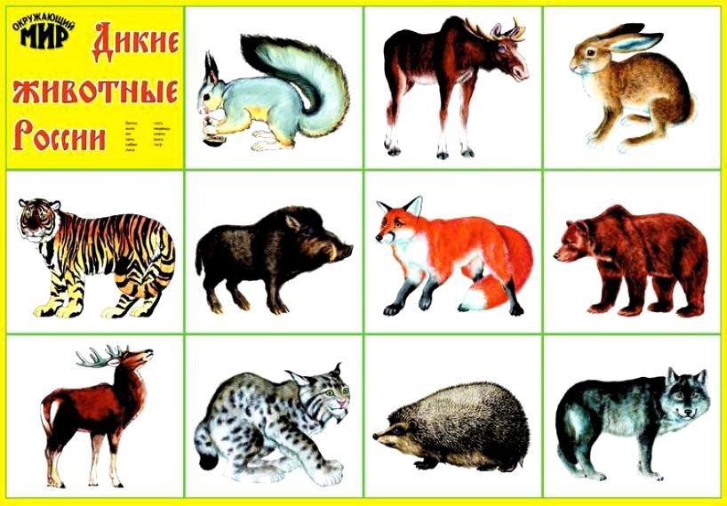 еде, картинки диких и домашних животных с описанием ручьи