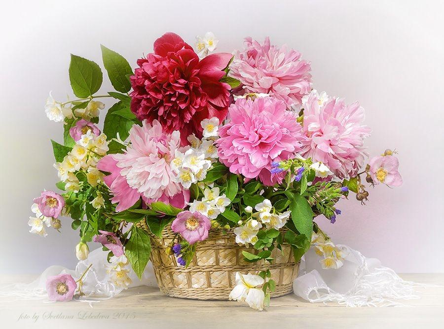 Картинки для Светы цветы и букеты 013