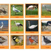 Картинки для детей водоплавающие птицы 023