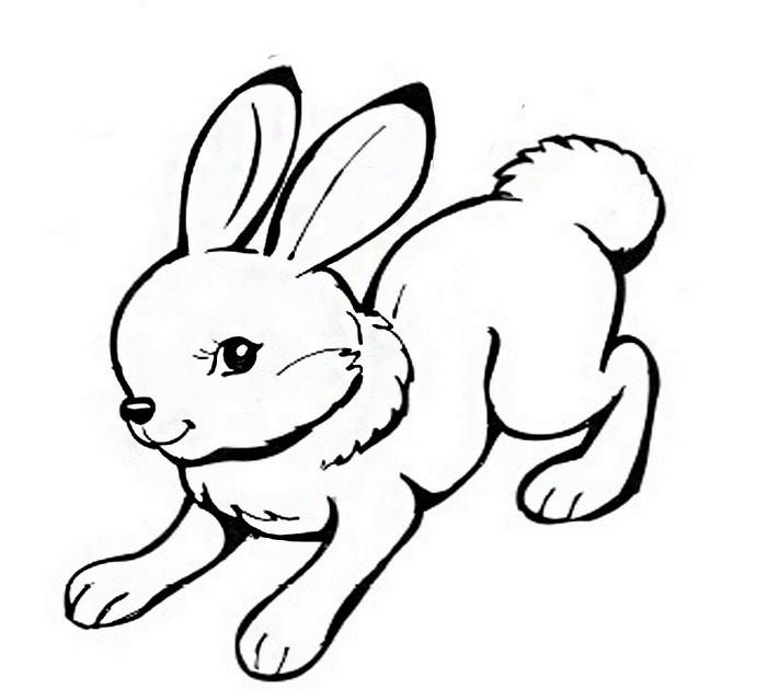 пользе вреде серый заяц картинка для раскрашивания свою очередь