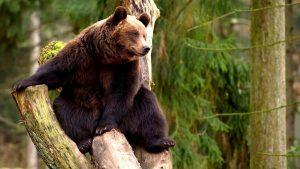 Картинки для детей медведь осенью   подборка 017
