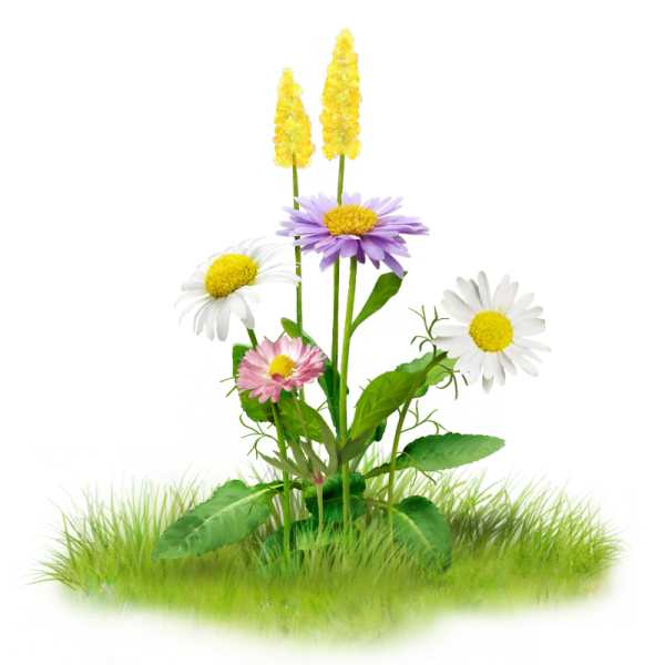 Летние цветы картинки для детей на прозрачном фоне