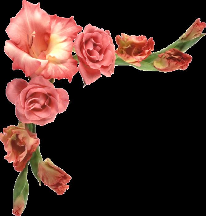 Картинки цветы для фотошопа, два