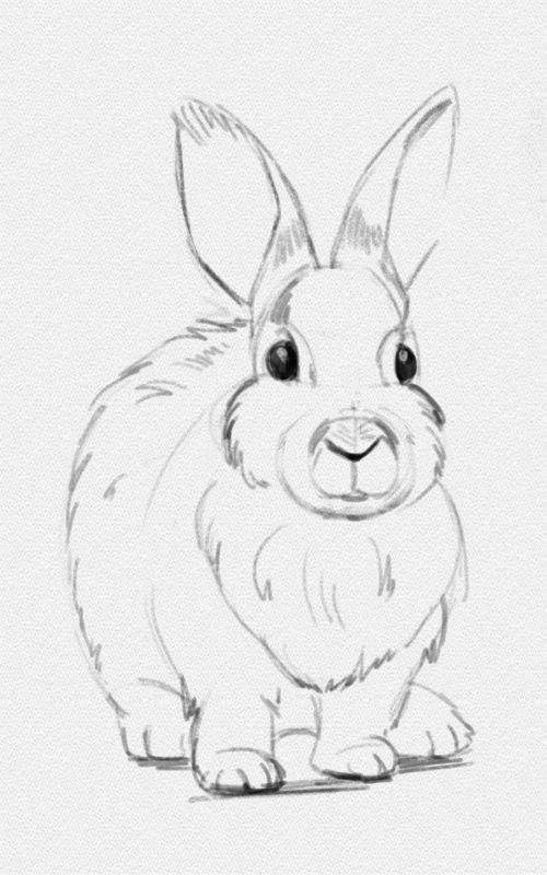 Картинки для срисовки животных легкие и простые 001