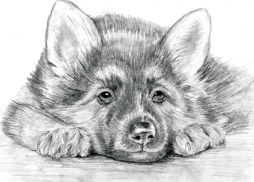 Картинки для срисовки животных легкие и простые 012