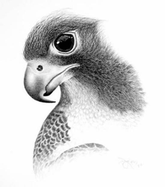 Картинки для срисовки животных легкие и простые 022