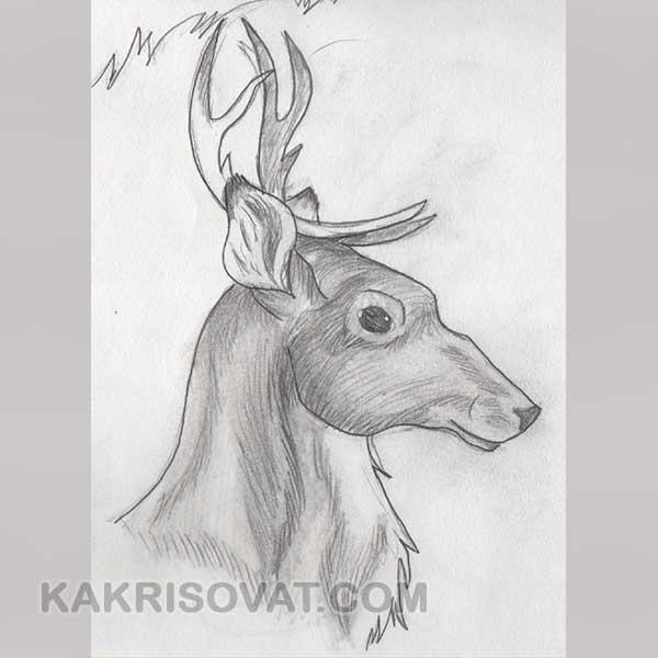 Картинки для срисовки животных легкие и простые 025
