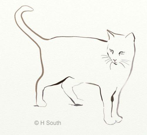 Картинки для срисовки кошки   красивые и милые (16)