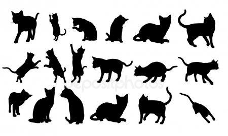 Картинки для срисовки кошки   красивые и милые (22)
