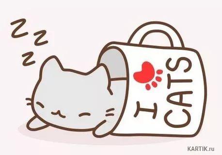 Картинки для срисовки кошки   красивые и милые (27)