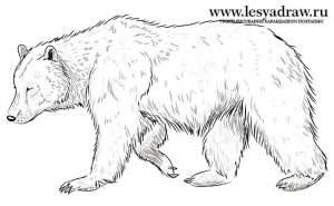 Картинки для срисовки медвежонка   подборка 024