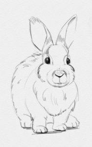 Картинки животных для срисовки карандашом019