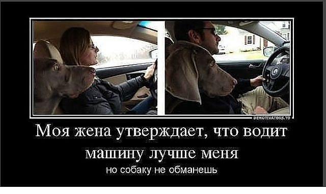 Картинки за рулем смешные и веселые013