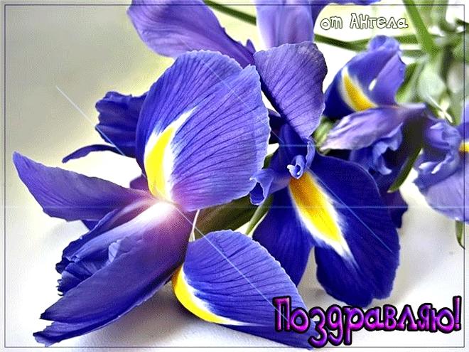 Открытка с днем рождения с цветами ирис, открыток февраля