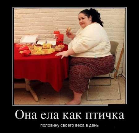 Картинки и фото смешные про диету013