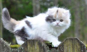 Картинки котенок и кошка   красивые027