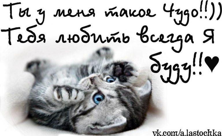 картинки люблю тебя мой родной котик расскажу