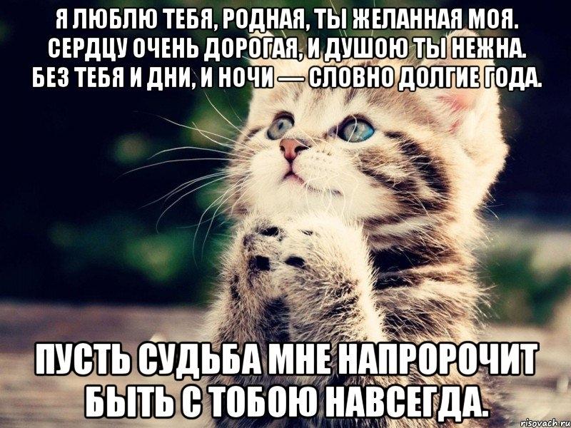сами себе картинки котик дорогой любимый спинного