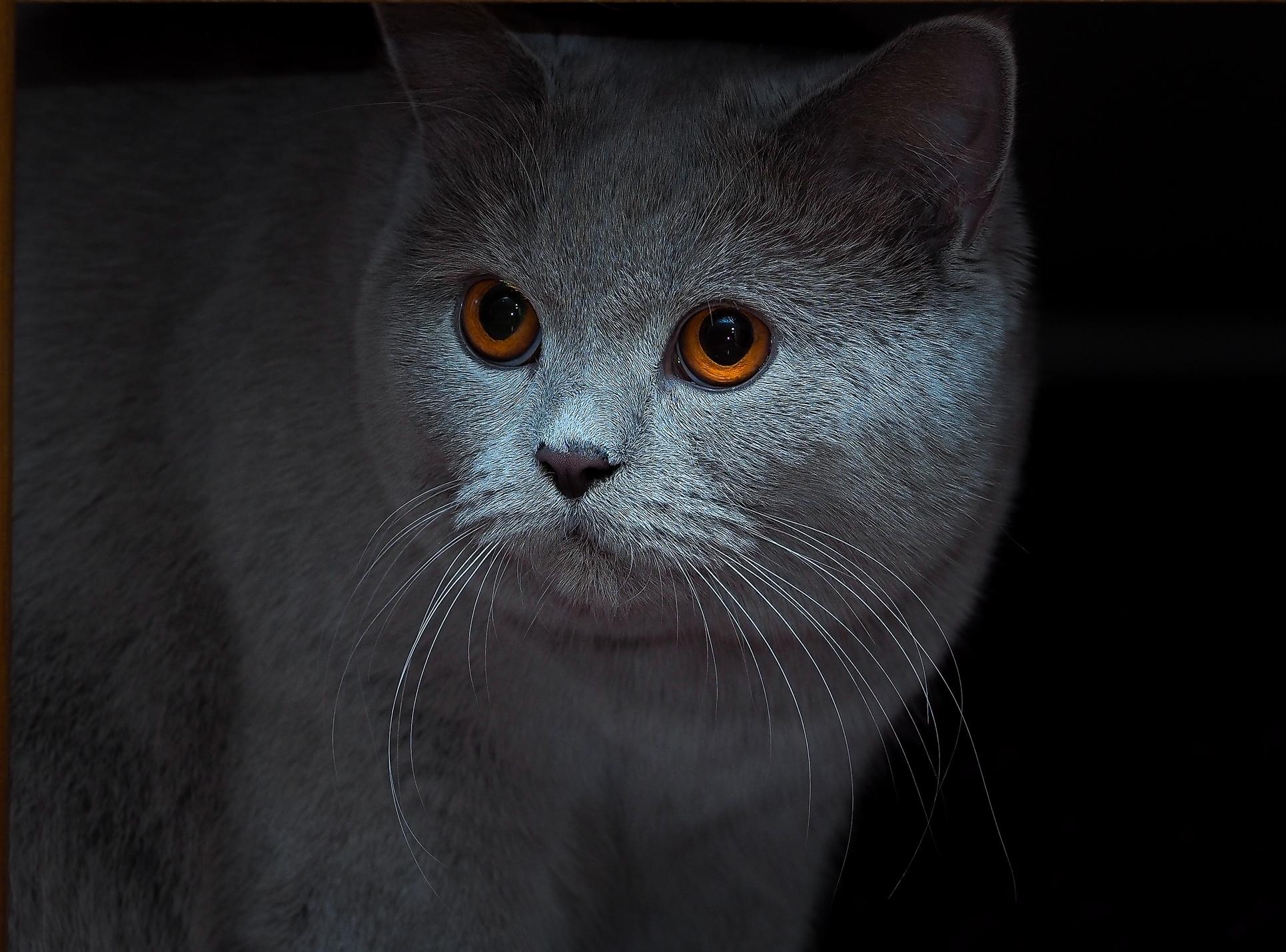 Картинки котят скачать на телефон   супер заставки (10)
