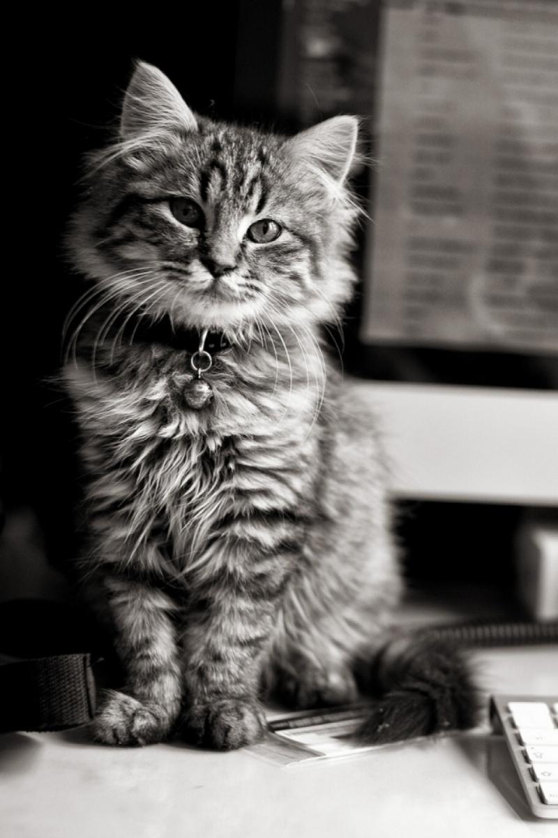 Картинки котят скачать на телефон   супер заставки (17)