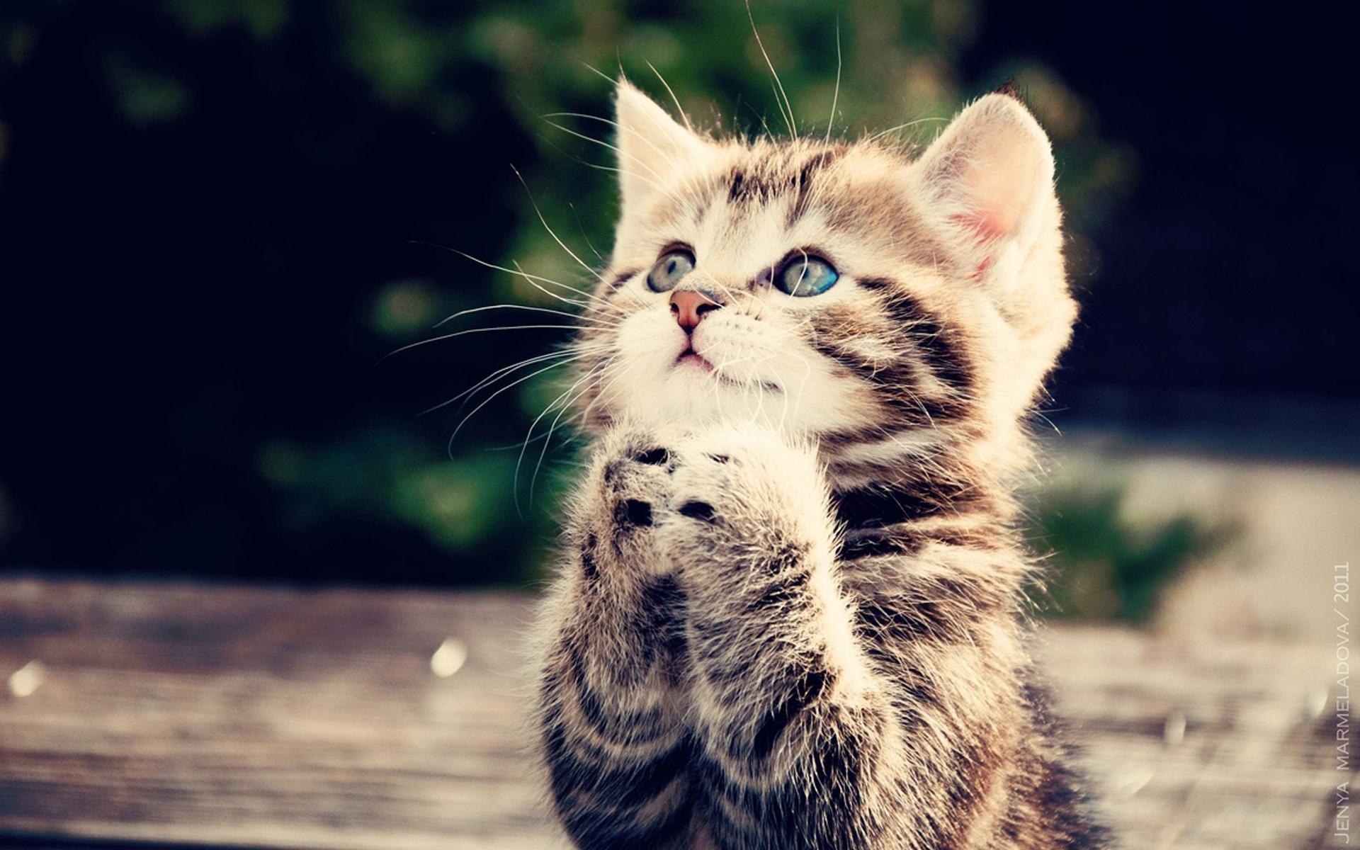 Картинки котят скачать на телефон   супер заставки (4)