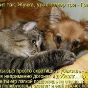 Картинки кошка с собакой   прикольные фото 024