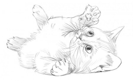 Картинки кошки карандашом для срисовки 003