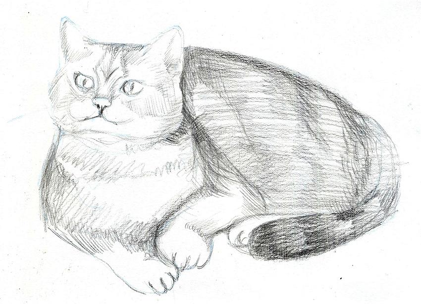Картинки кошки карандашом для срисовки 007