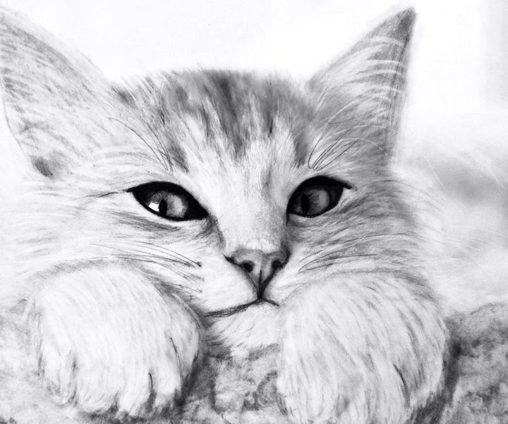 Картинки кошки карандашом для срисовки 010
